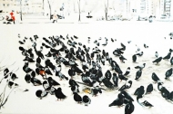 Tauben-auf-Schnee_Svetlana_Hansemann